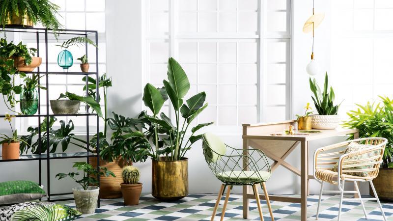 chariot plante intérieur