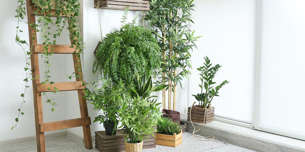 plante-dinterieur