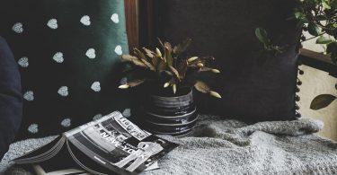 plantes vertes pour décorer