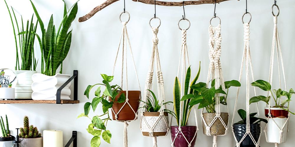 suspension plante intérieur